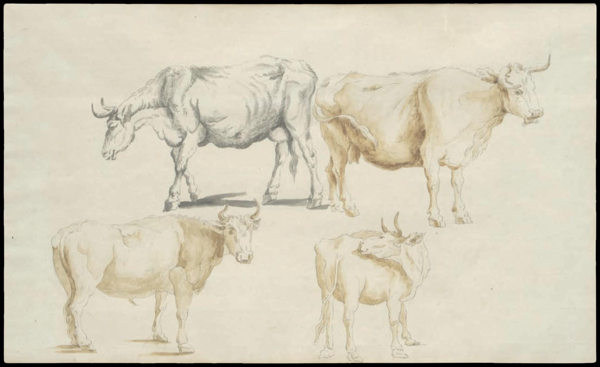 Dessin d'Italie de Jean-Baptiste TIERCE (Rouen 1737 – Florence 1794). Collection du Marquis de Sade Quatre études bovines